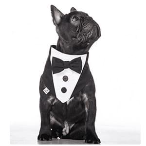 abiti da cerimonia per cani